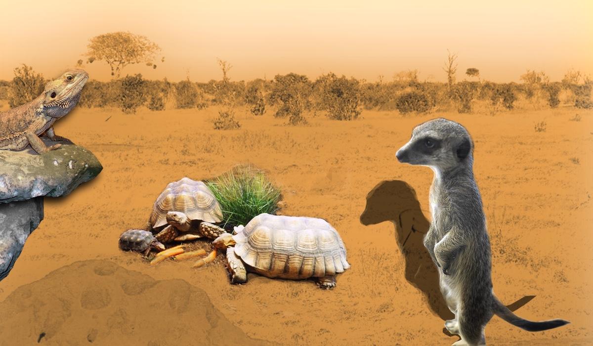 erfurter zoo savanne
